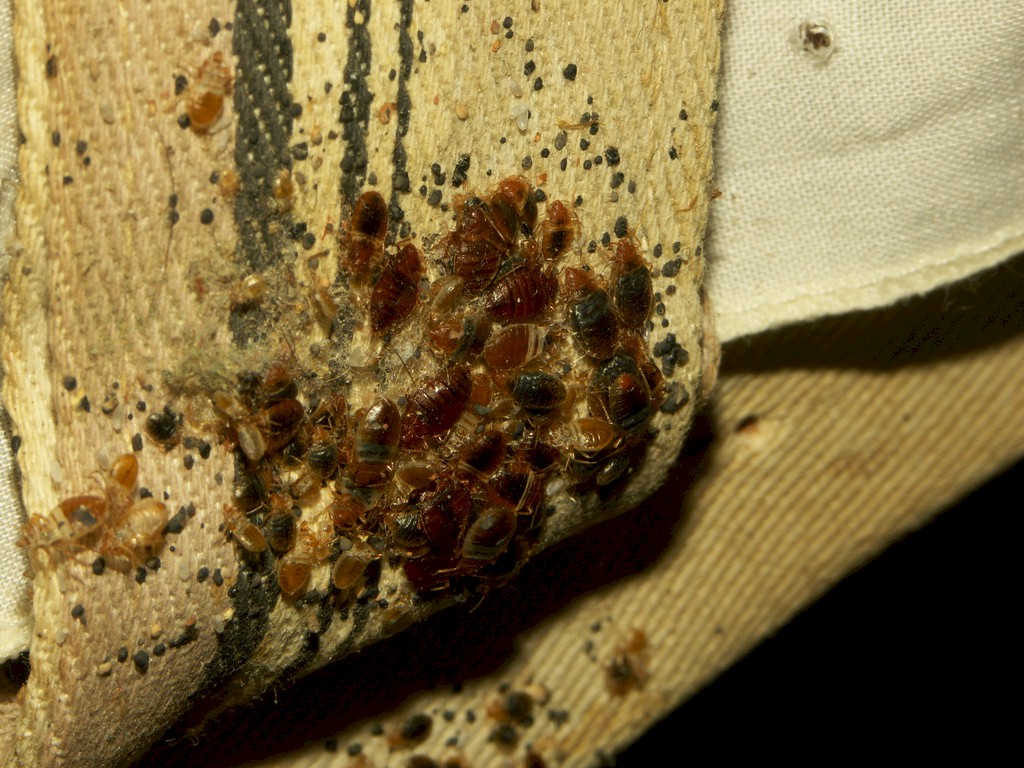 how to avoid bedbugs skyakes